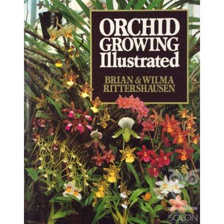 Historia política del ejército español